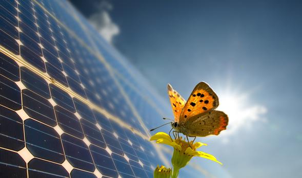 77363443_solarpanels